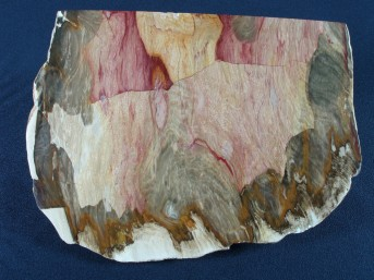 Petrified Wood, Chinchilla QLD